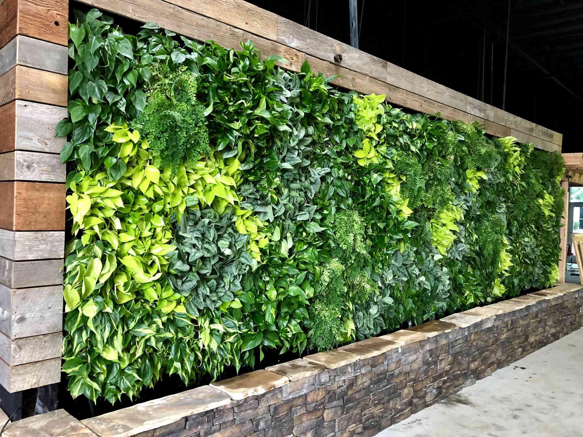 good plants for green walls