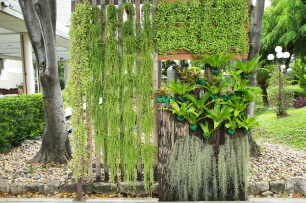 good plants for green walls
