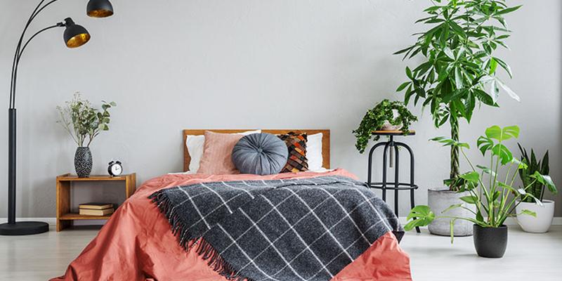 plants in bedroom good or bad