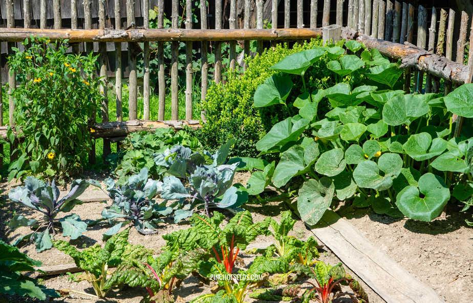 Vegetable garden at home