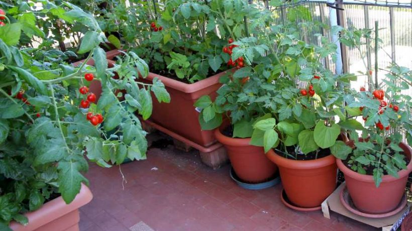 Vegetable garden at home: The essential for your care