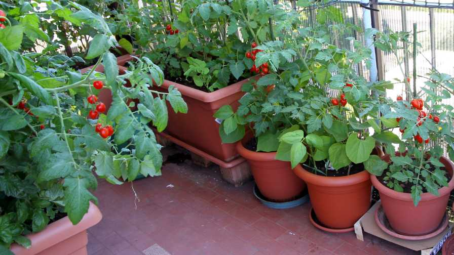 Vegetable garden at home